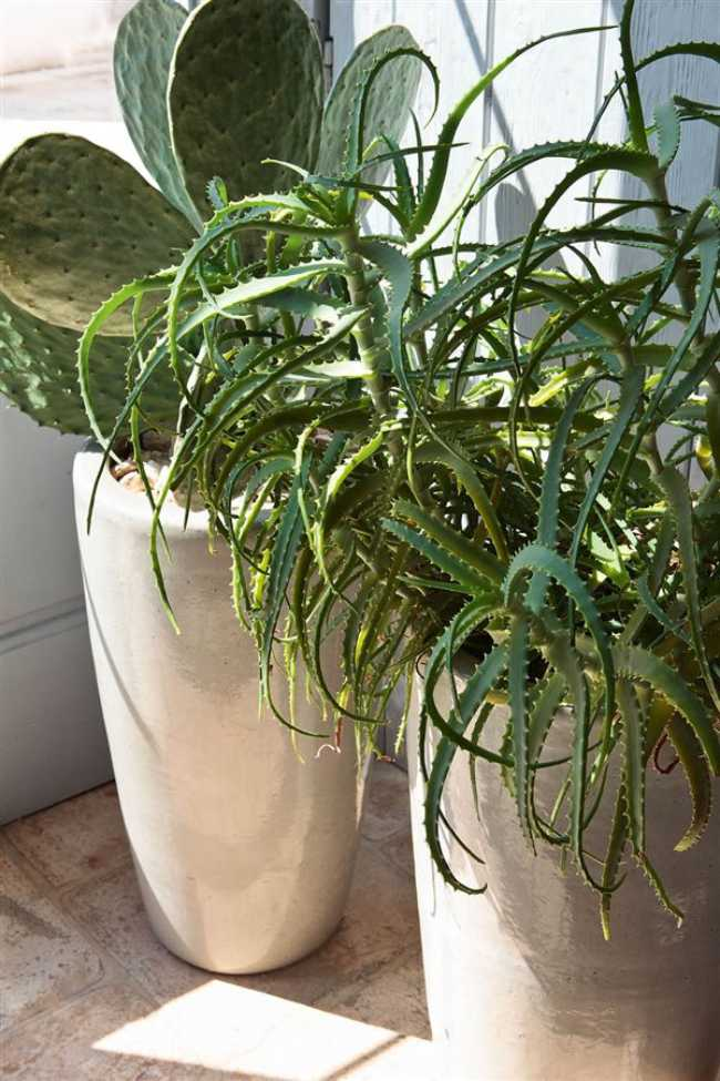 hardy indoor plants