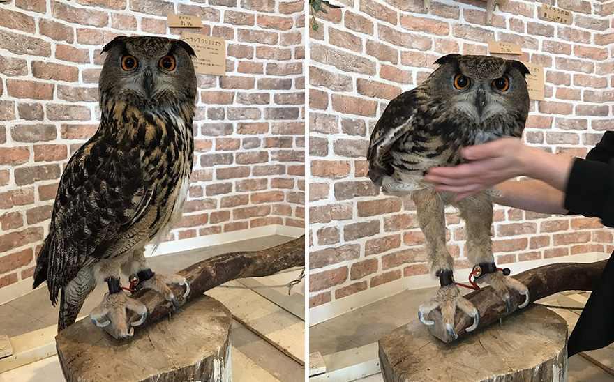 owl-long-legs